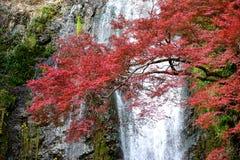 Foglie della cascata e di autunno di Minoh Immagini Stock