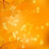 Foglie della castagna dell'autunno Fotografia Stock