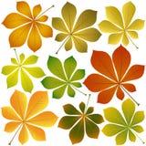 Foglie della castagna di autunno Fotografia Stock