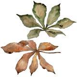 Foglie della castagna di autunno Fogliame floreale del giardino botanico della pianta della foglia Immagini Stock