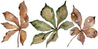 Foglie della castagna di autunno Fogliame floreale del giardino botanico della pianta della foglia Fotografie Stock