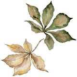 Foglie della castagna di autunno Fogliame floreale del giardino botanico della pianta della foglia Fotografia Stock Libera da Diritti