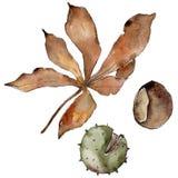 Foglie della castagna di autunno Fogliame floreale del giardino botanico della pianta della foglia Immagini Stock Libere da Diritti