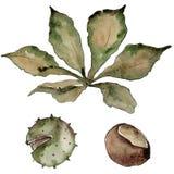 Foglie della castagna di autunno Fogliame floreale del giardino botanico della pianta della foglia Fotografie Stock Libere da Diritti