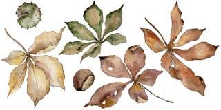 Foglie della castagna di autunno Fogliame floreale del giardino botanico della pianta della foglia Fotografia Stock