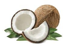Foglie della composizione nella noce di cocco isolate su fondo bianco Immagini Stock Libere da Diritti