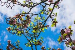 Foglie della depressione del cielo Fotografie Stock