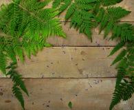 Foglie della felce su un fondo di legno Fotografia Stock