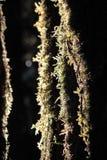 Foglie della felce sull'albero Fotografie Stock Libere da Diritti