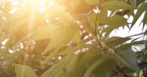 Foglie della foresta Metraggio di legno verde di luce solare della natura Ciao concetto di estate video d archivio