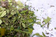 Foglie della marijuana, polvere delle droghe della cannabis su un fondo bianco immagini stock
