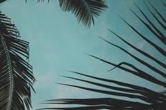 Foglie della noce di cocco Fotografia Stock Libera da Diritti