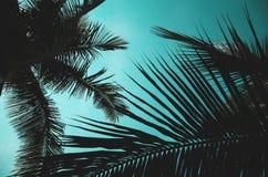 Foglie della noce di cocco Fotografie Stock
