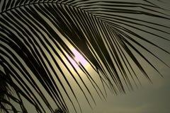 Foglie della noce di cocco e luce del sole immagine stock