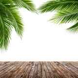 Foglie della noce di cocco e pavimento di legno isolati su fondo bianco Immagine Stock Libera da Diritti