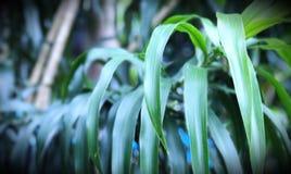Foglie della pianta su fondo Immagini Stock Libere da Diritti