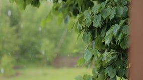 Foglie della pioggia di estate stock footage