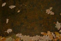 Foglie della quercia di autunno su un ferro arrugginito Fotografia Stock