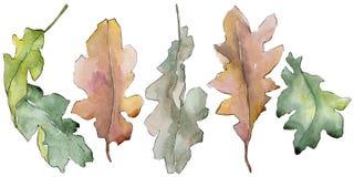 Foglie della quercia in uno stile dell'acquerello isolate Fotografia Stock Libera da Diritti