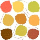 Foglie della tremula di autunno Immagine Stock Libera da Diritti