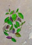 Foglie delle erbe (basilico) Fotografia Stock Libera da Diritti