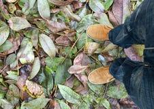 Foglie delle gambe Fotografie Stock Libere da Diritti