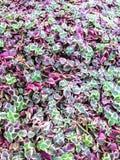 Foglie delle piante fotografia stock libera da diritti