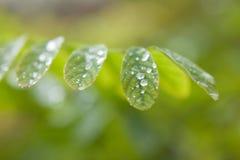 Foglie delle piante dopo una fine della pioggia su Immagine Stock