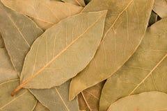 Foglie delle foglie secche della baia Fotografia Stock