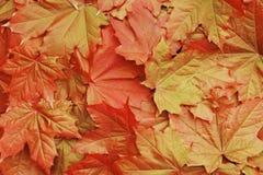 Foglie di acero arancio di autunno come fondo Fotografia Stock Libera da Diritti