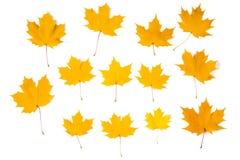 Foglie di acero arancioni di autunno Immagine Stock Libera da Diritti