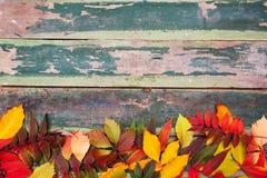 Foglie di acero di autunno sopra vecchio fondo di legno verde con lo spazio della copia Immagini Stock Libere da Diritti