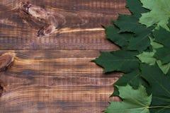 Foglie di acero canadesi su legno immagini stock