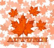 Foglie di acero con l'autunno di parola, vettore Fotografie Stock
