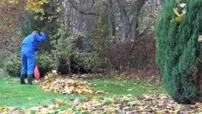 Foglie di acero del rastrello del giovane in mucchio in giardino Lavoro di stagione 4K stock footage