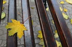 Foglie di acero di autunno Immagine Stock