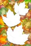 Foglie di acero di autunno con gli spazi bianchi del foglio fotografia stock