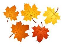 Foglie di acero di autunno di vari colori. Illu di vettore Immagini Stock