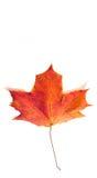 Foglie di acero di autunno la foglia dell'acero, utilizzata come emblema di Fotografia Stock