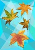 Foglie di acero di autunno nei poligoni Immagini Stock