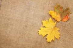 Foglie di acero di autunno sopra il fondo di struttura della tela da imballaggio Immagini Stock