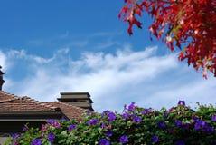 Foglie di acero e cielo blu rossi fotografia stock libera da diritti