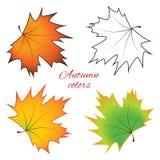 Foglie di acero luminose di autunno - vettore fotografia stock