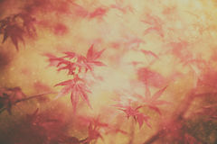 Foglie di acero magiche di autunno di colore con le gocce di pioggia immagine stock