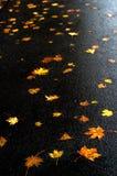 Foglie di acero multicolori sull'asfalto dopo pioggia in autunno Fotografia Stock