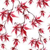 Foglie di acero rosse cinesi Modello senza cuciture su fondo bianco watercolor fotografia stock libera da diritti