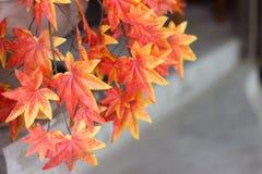 foglie di acero rosse per fondo Immagini Stock