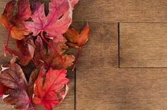 Foglie di acero rosso multiple sulla pavimentazione dell'acero Immagini Stock