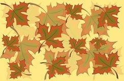 Foglie di acero su un fondo giallo Autumn Pattern Fotografie Stock