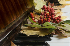 Foglie di acero su un piano Fotografie Stock Libere da Diritti